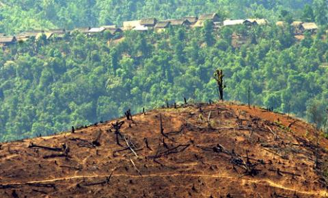 Myanmar: Timber demand fuels illegal logging | Maryknoll